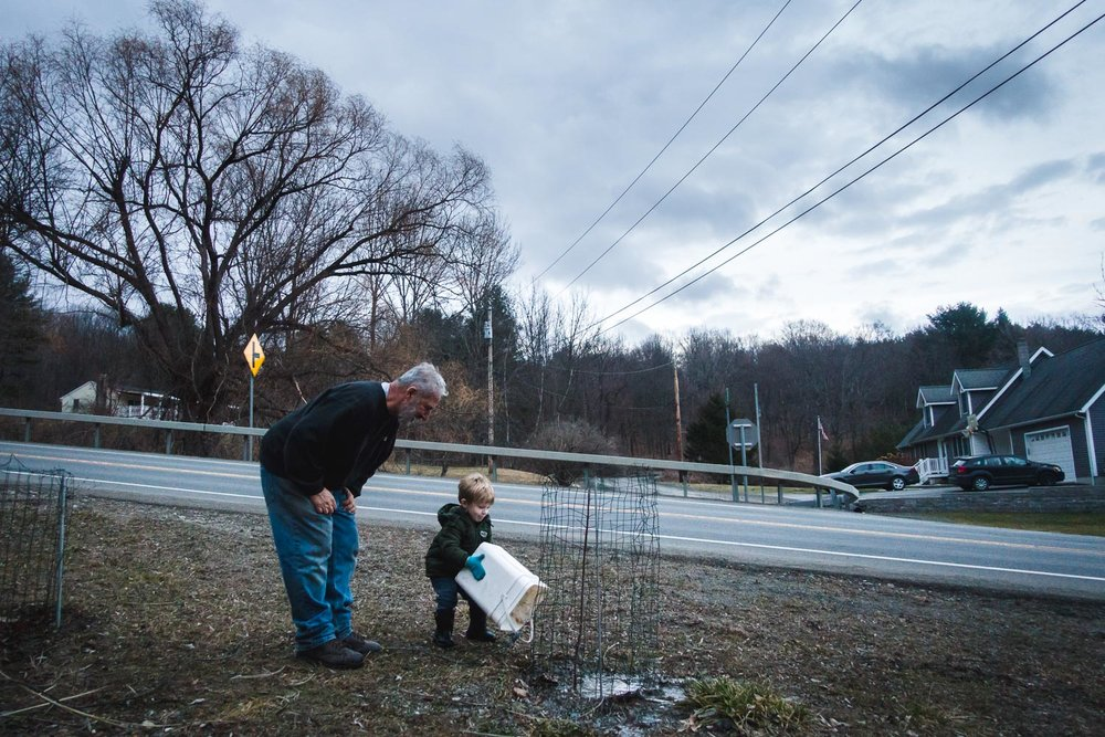 Boy pours out bucket of water onto a young tree with grandfather watching.