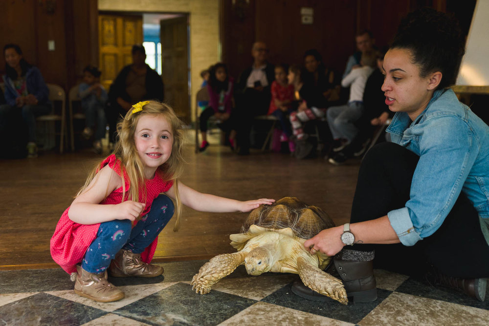 A little girl pets a big tortoise at the Science Museum of Long Island.