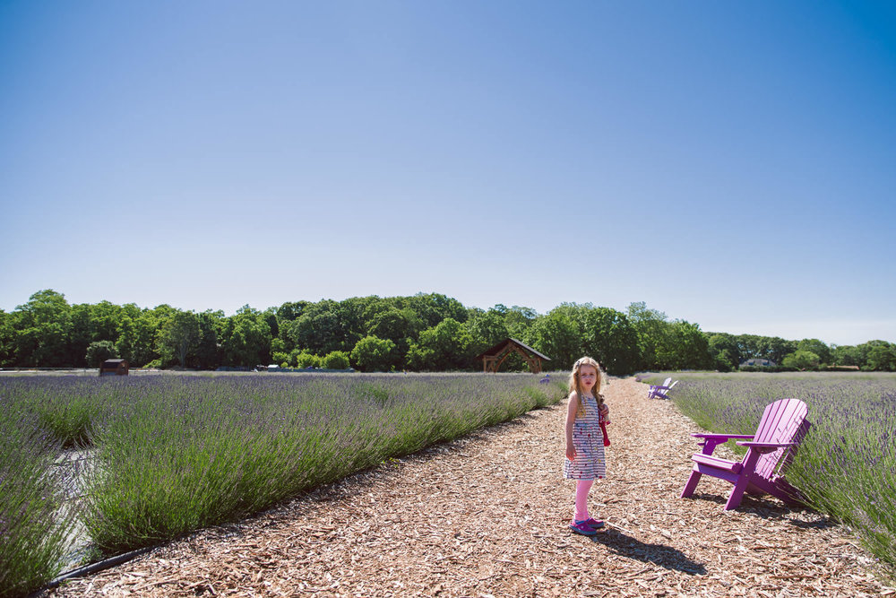 A little girl stands in a field of lavender at Lavender by the Bay.