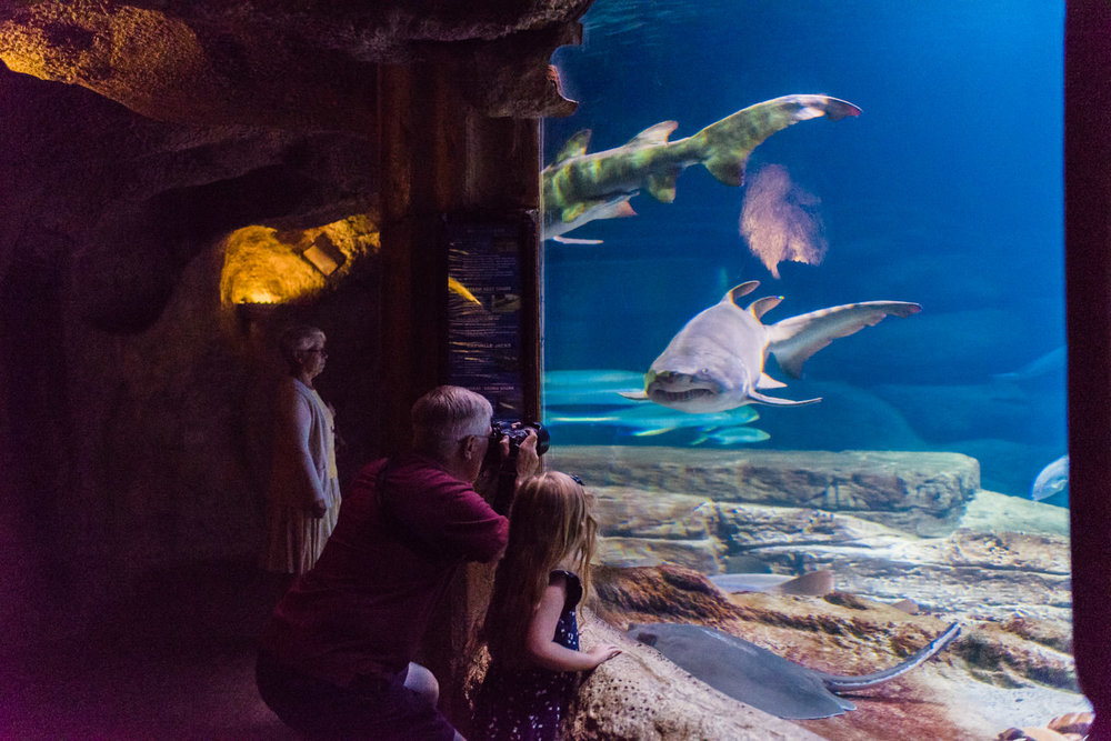 A family looks at the shark exhibit at the Long Island Aquarium.