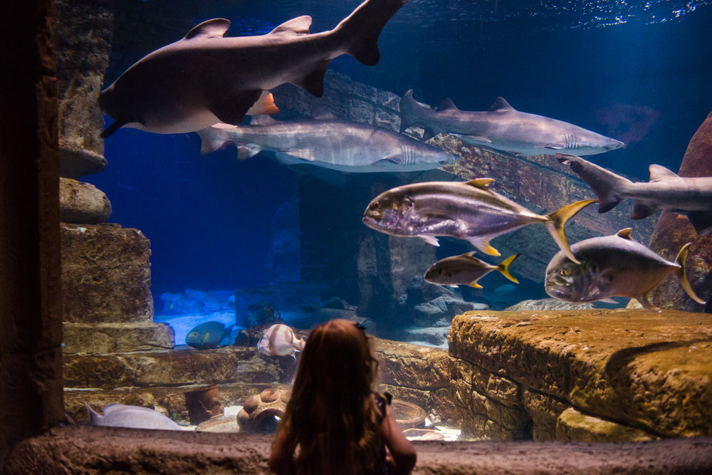 A little girl looks at an exhibit at the Long Island Aquarium.