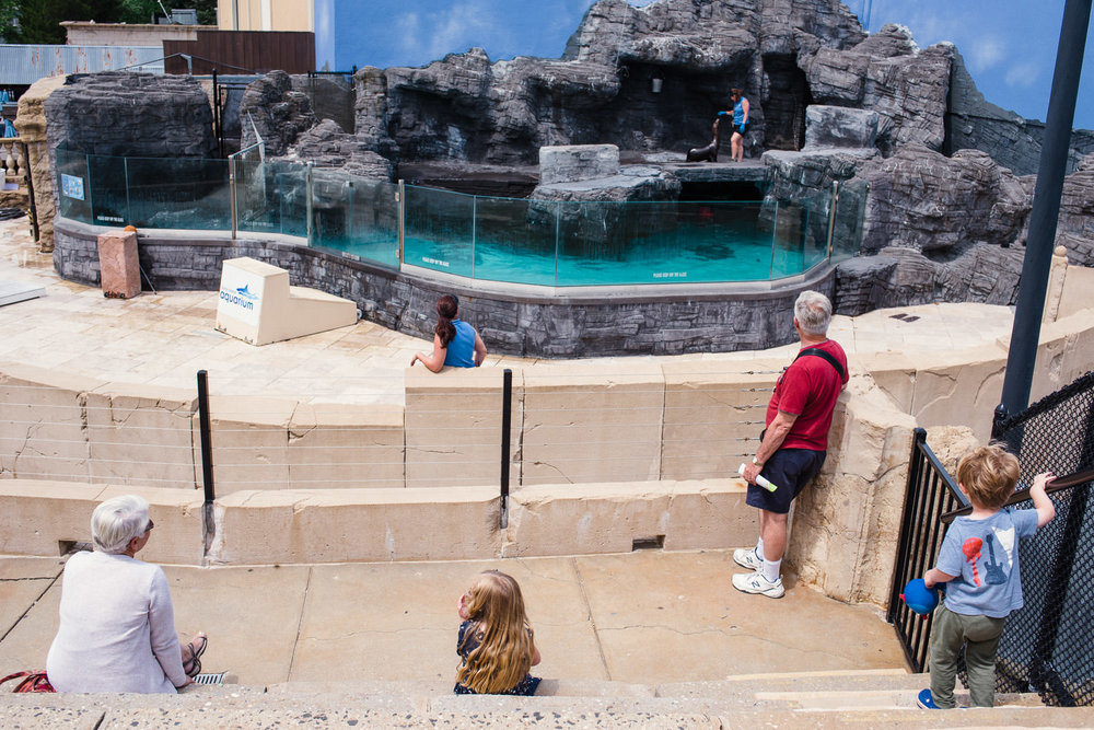 A family watches the sea lion training at the Long Island Aquarium.