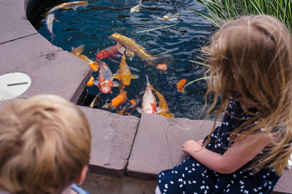 Children feed the koi at the Long Island Aquarium.