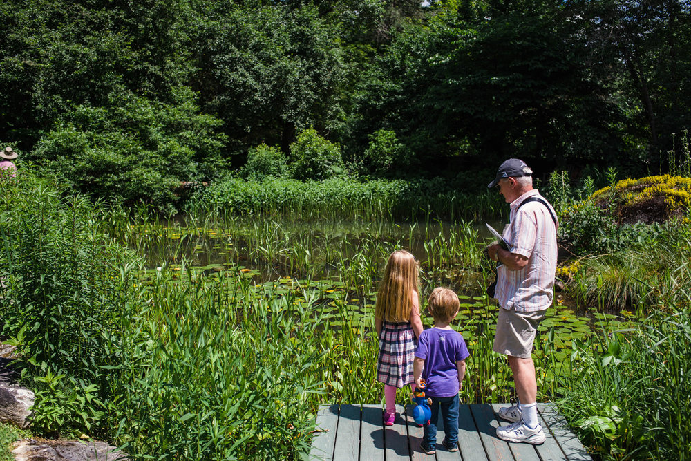 Children and grandfather look at a pond filled with lilypads at the Berkshire Botanical Gardens.