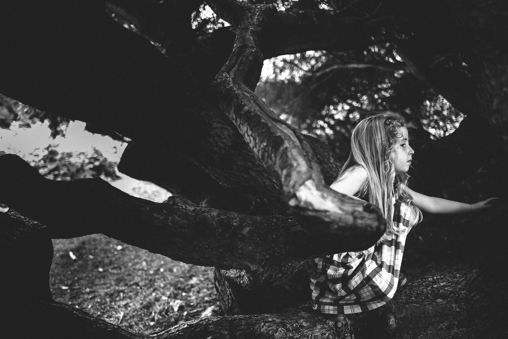 A little girl climbs a tree at the Berkshire Botanical Gardens.