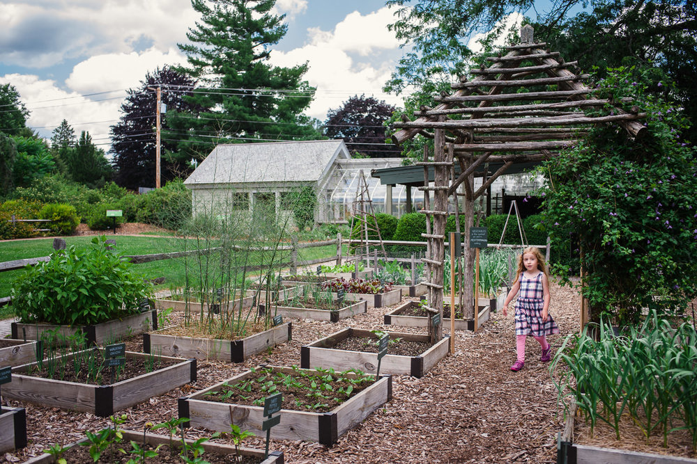 A little girl walks through the vegetable garden at the Berkshire Botanical Gardens.