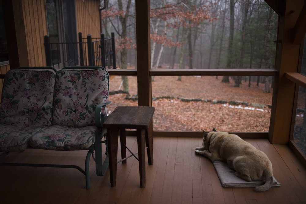 A dog sits on a porch surrounded by the woods in the fall.