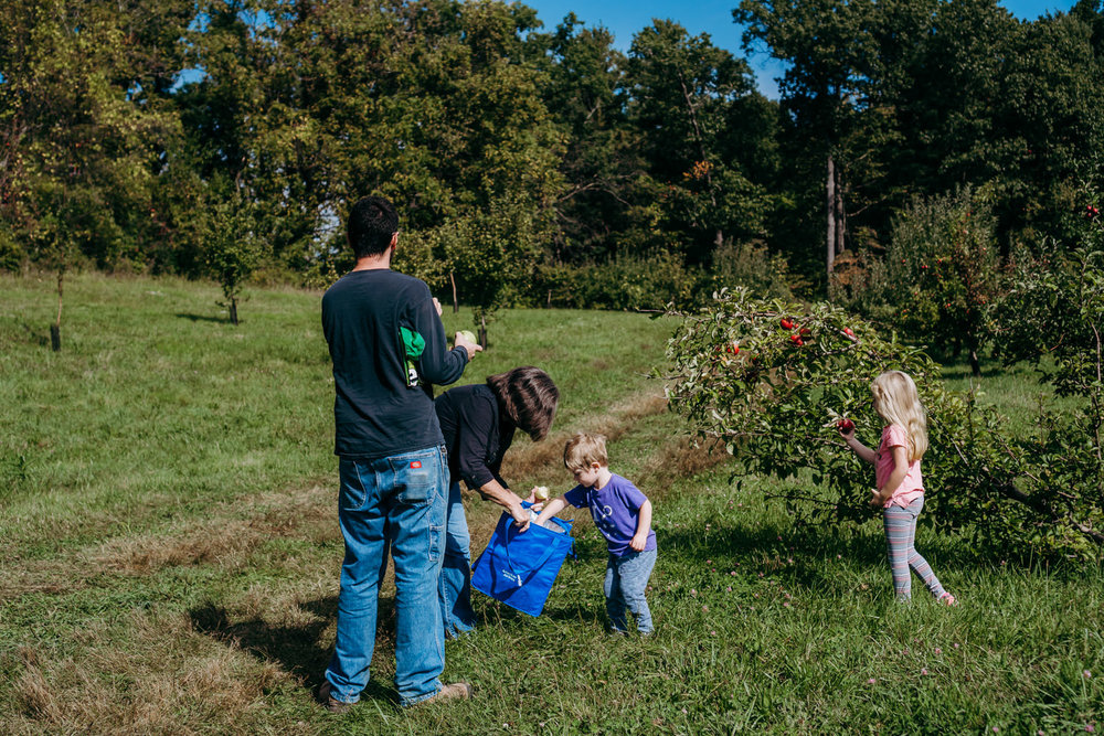 A family picks apples in an orchard in upstate New York.