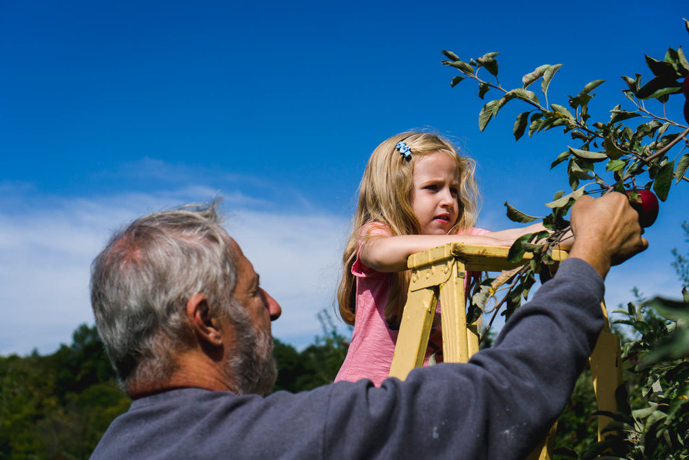 A little girl picks an apple from a tree with help from her grandfather.