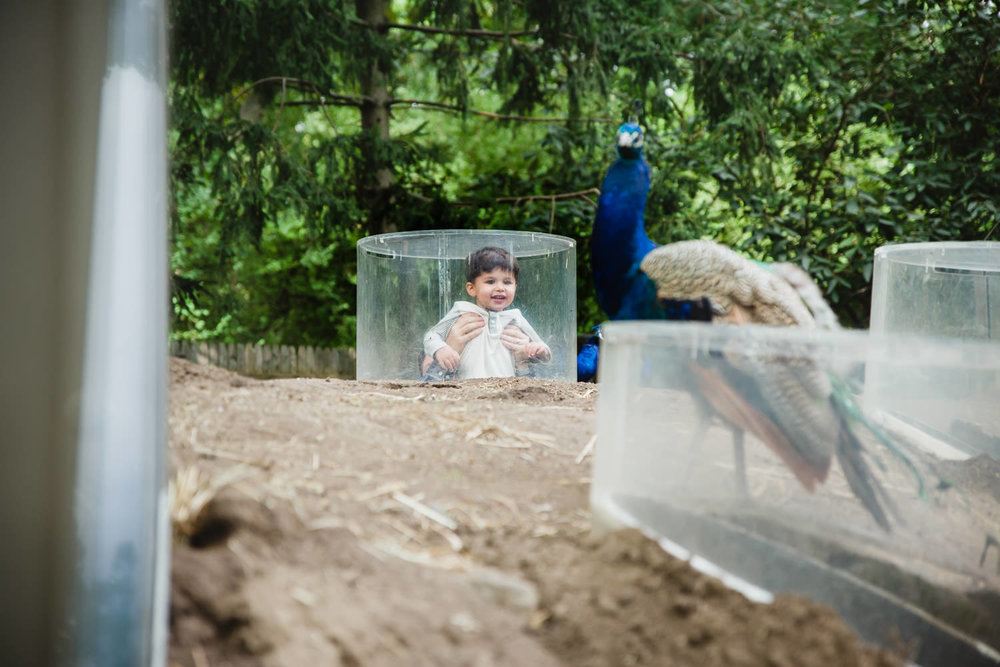 A little boy looks through a window at a peacock at the Bronx Zoo.