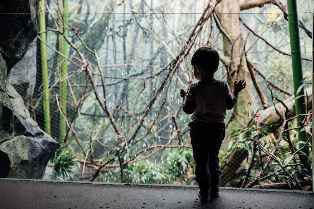 A boy looks at an exhibit in Madagascar at the Bronx Zoo.