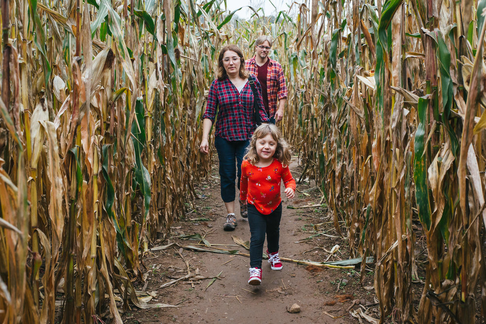 A family walks through a corn maze.