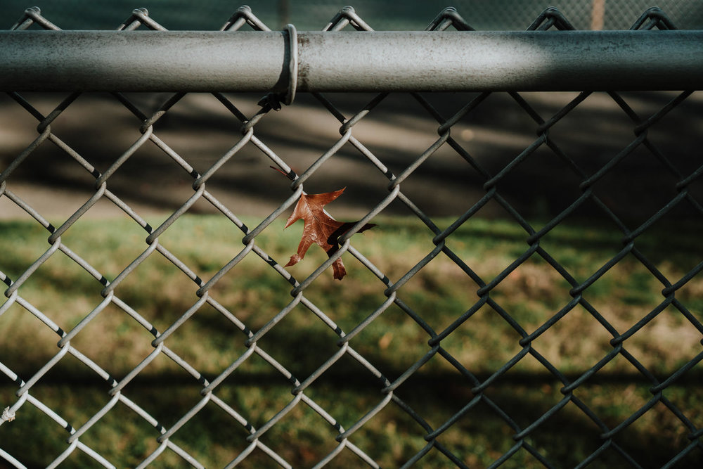 A leaf stuck in a chain link fence.