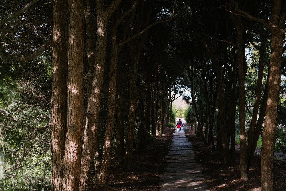Children walk through a tunnel of trees at Old Westbury Gardens.