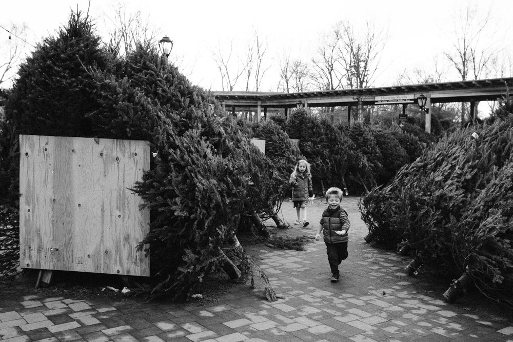Kids run past the Christmas trees at Hicks Nursery.