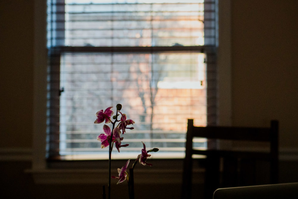 An orchid framed by the window.