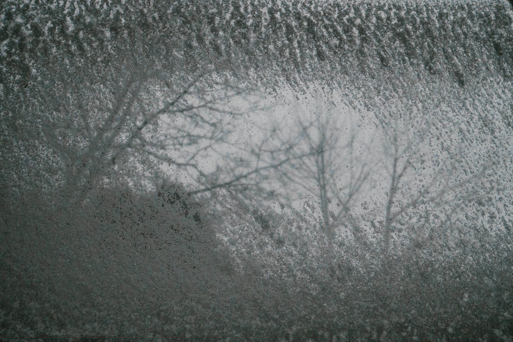 Trees seen through a frosty window.