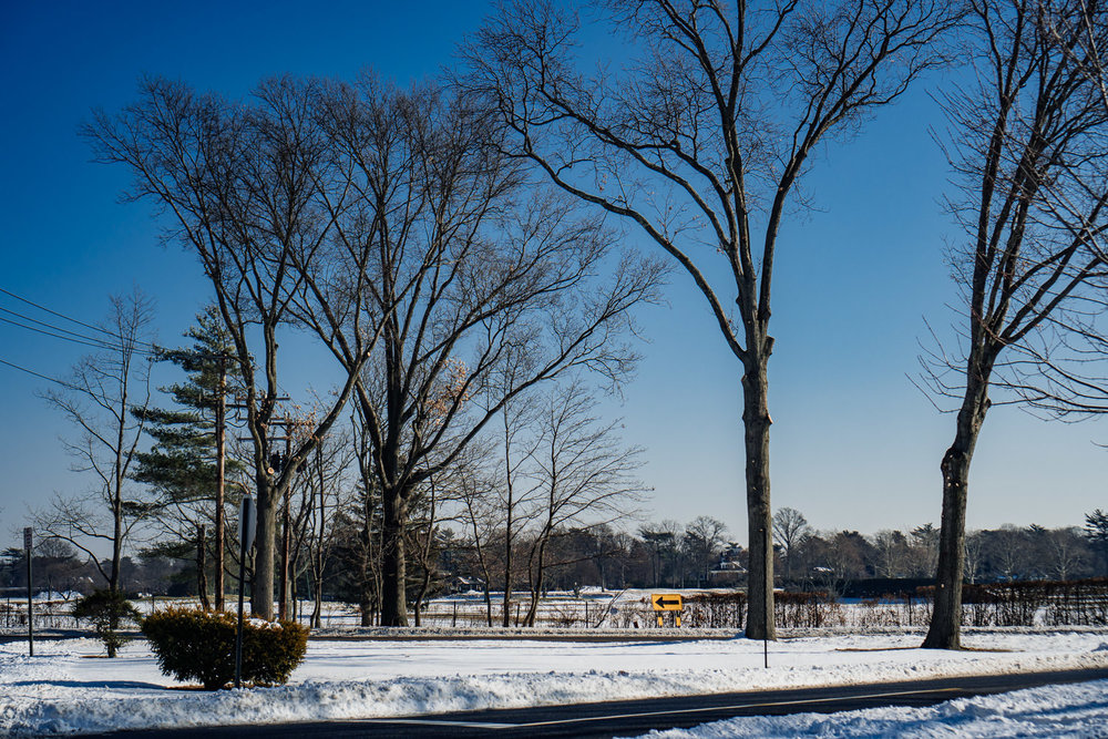 Bare trees in the snow with a bright blue sky.