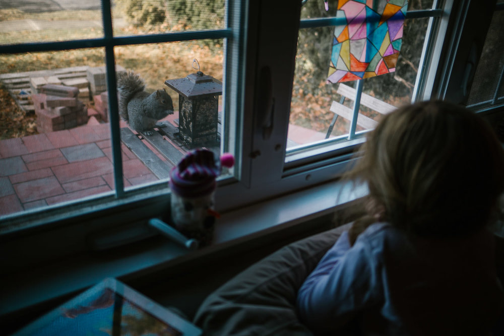 A little girl watches a squirrel eating birdseed outside her window.