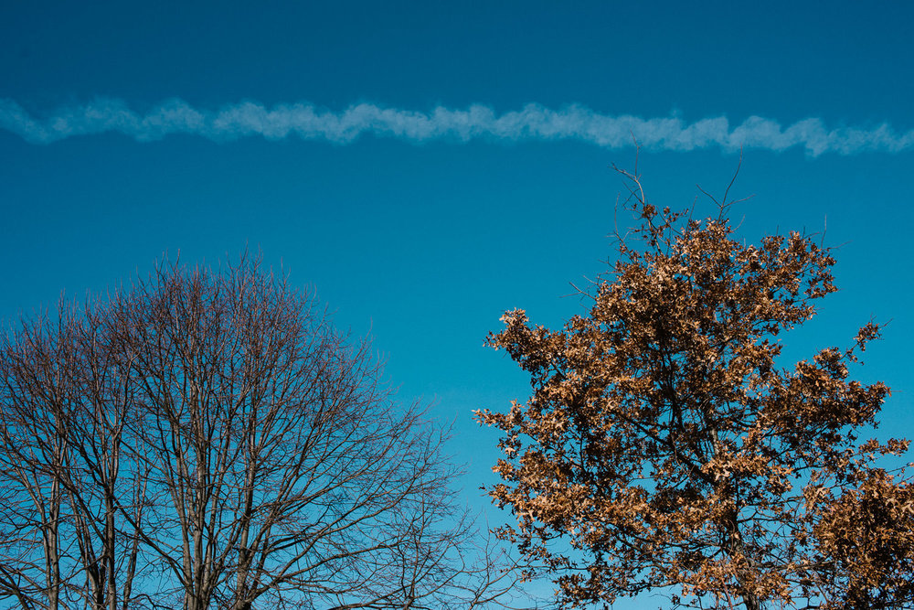A blue sky with bare winter trees.