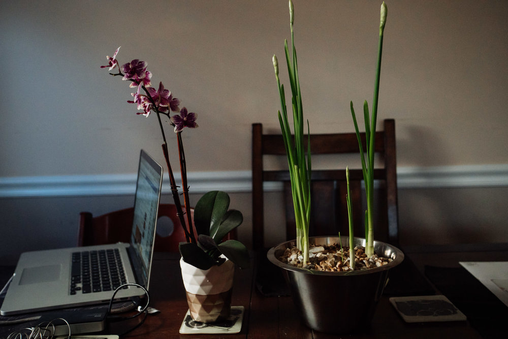 An orchid and paper whites bloom on a kitchen table.