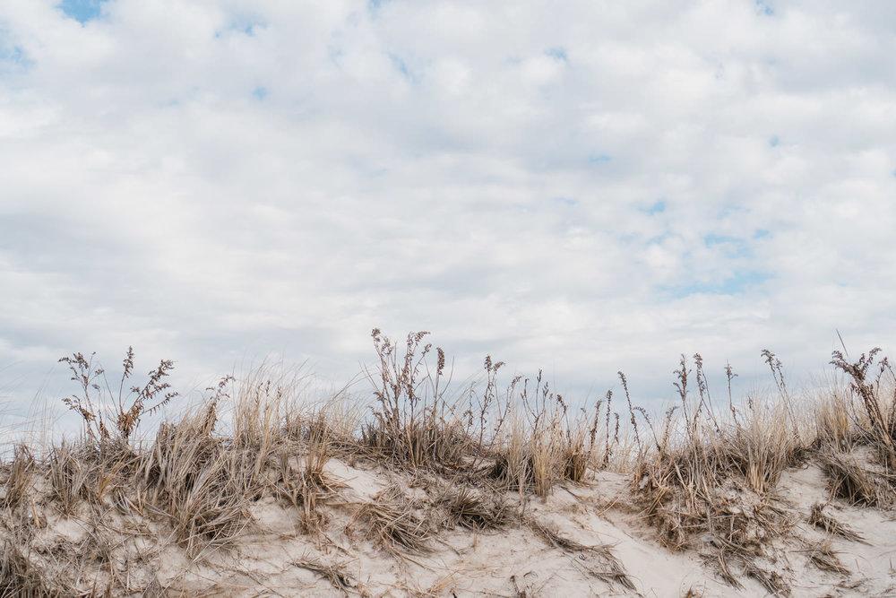 Sea grass at Jones Beach.