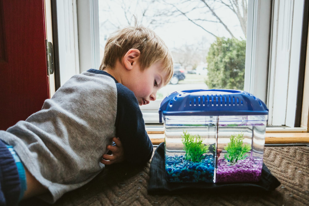 A little boy lies on the floor and looks in a fish tank.