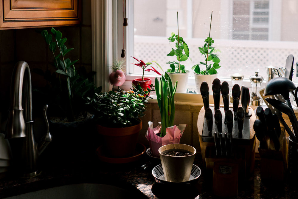 Plants on a kitchen counter.