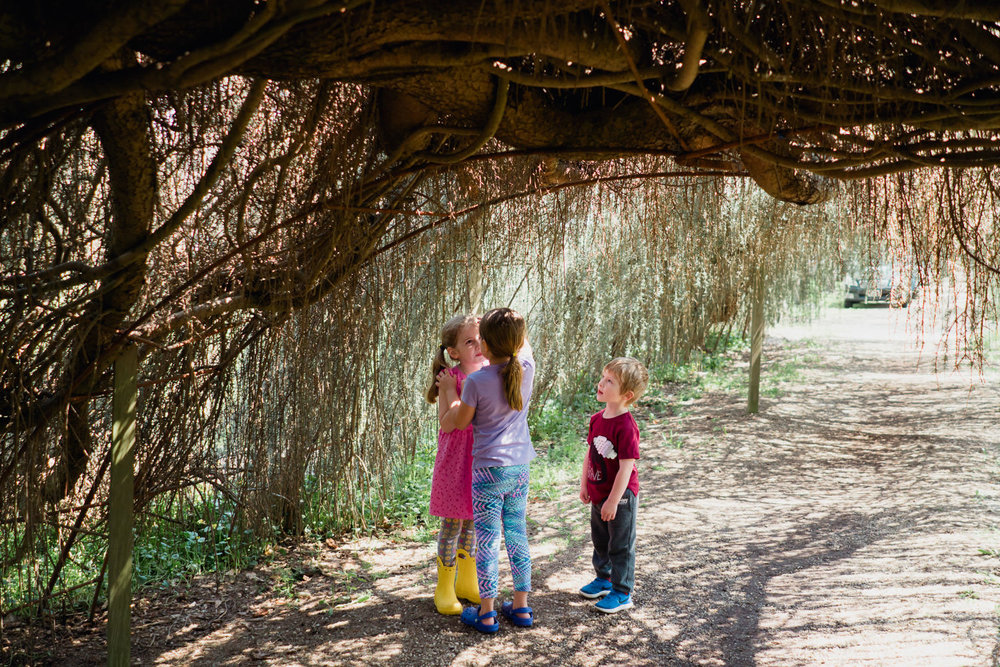 Some children chat under vines at Planting Fields.