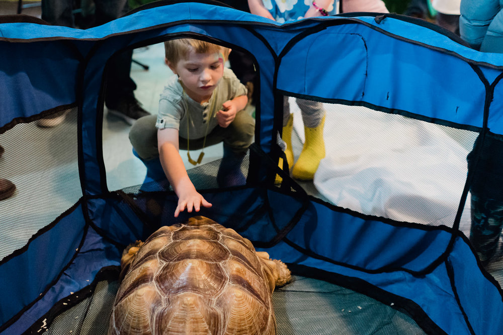 A little boy touches a big turtle.