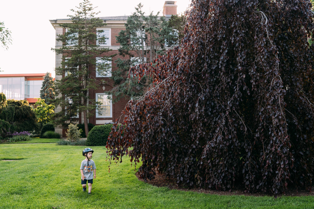 A little boy walks by a big tree at Adelphi.