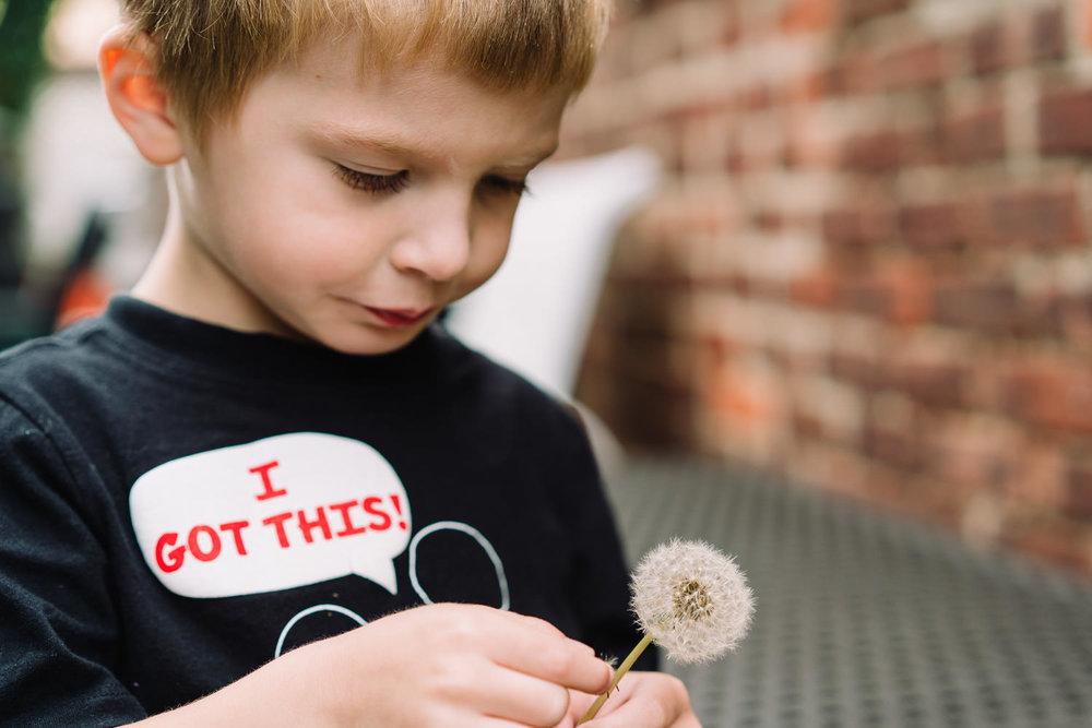 A little boy holds a dandelion.