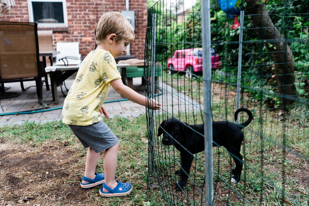 A little boy pets a dog in a pen.