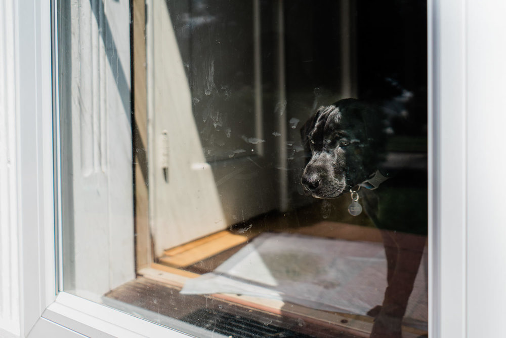A dog looks through a glass storm door to the outside.