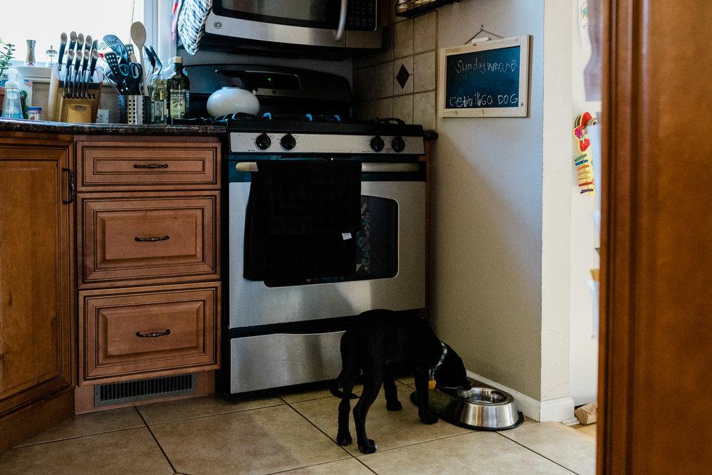 A puppy eats his food.
