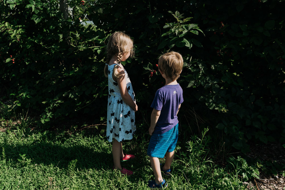 Kids look at the raspberry bushes at Crossroads Farm.