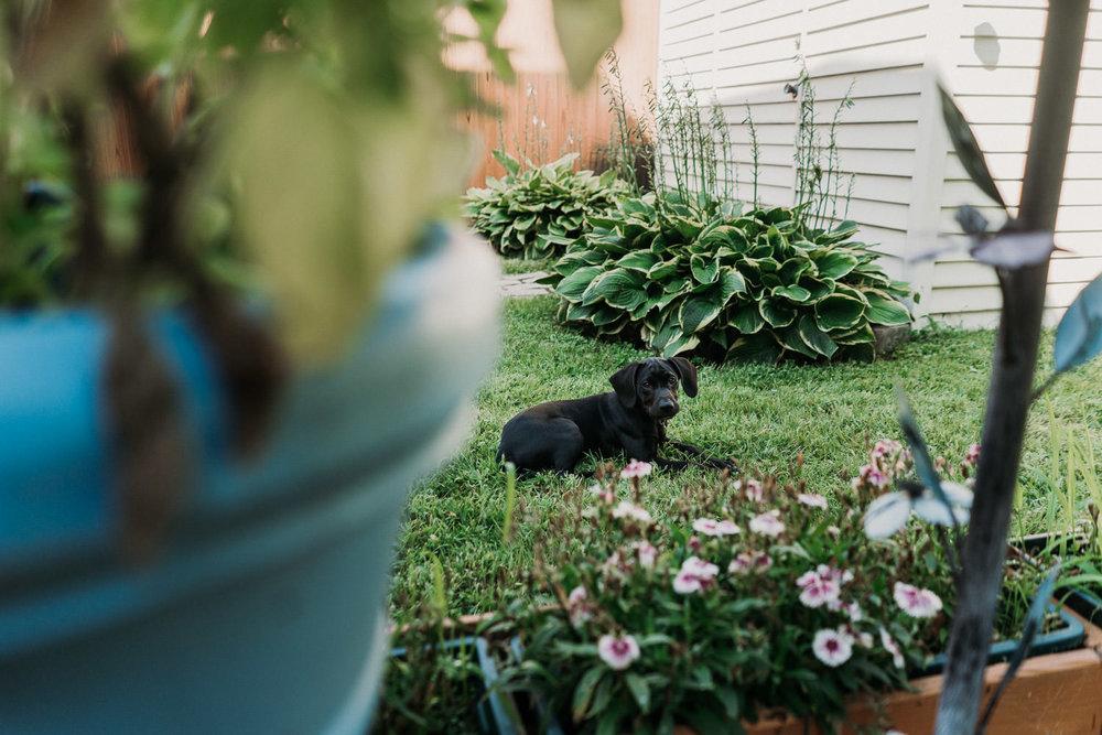A dog sits on a lawn.