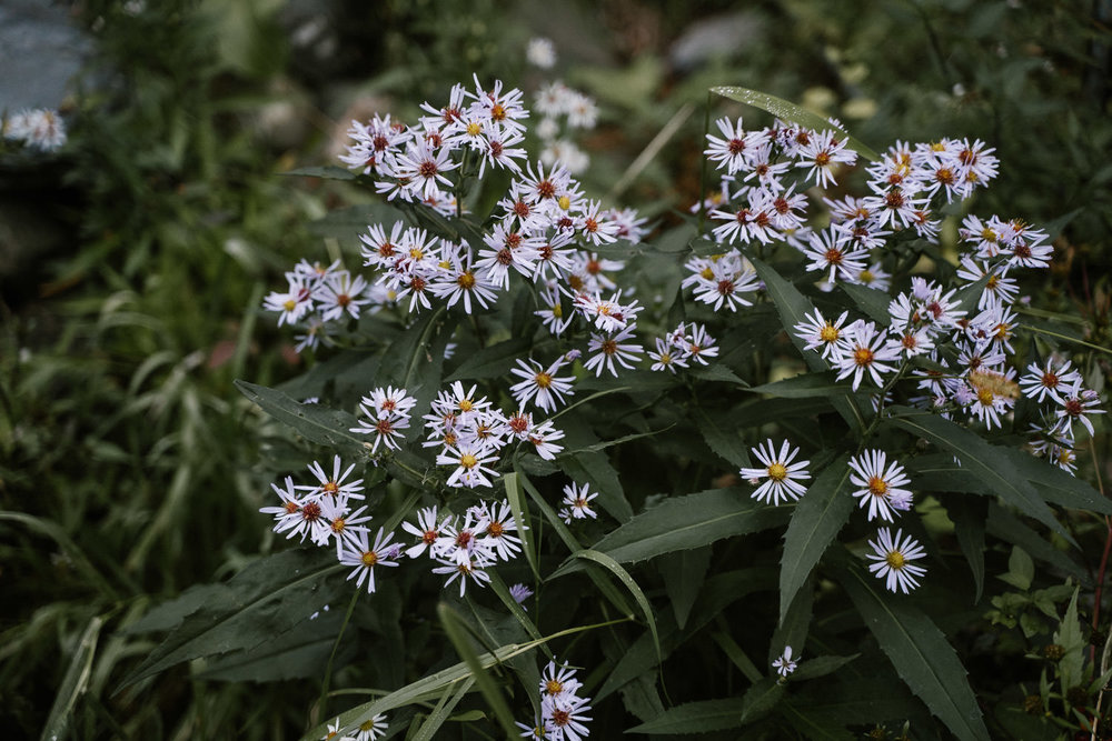 Daisies growing in the wild.