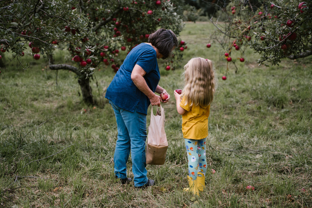 A little girl picks apples with her grandmother.