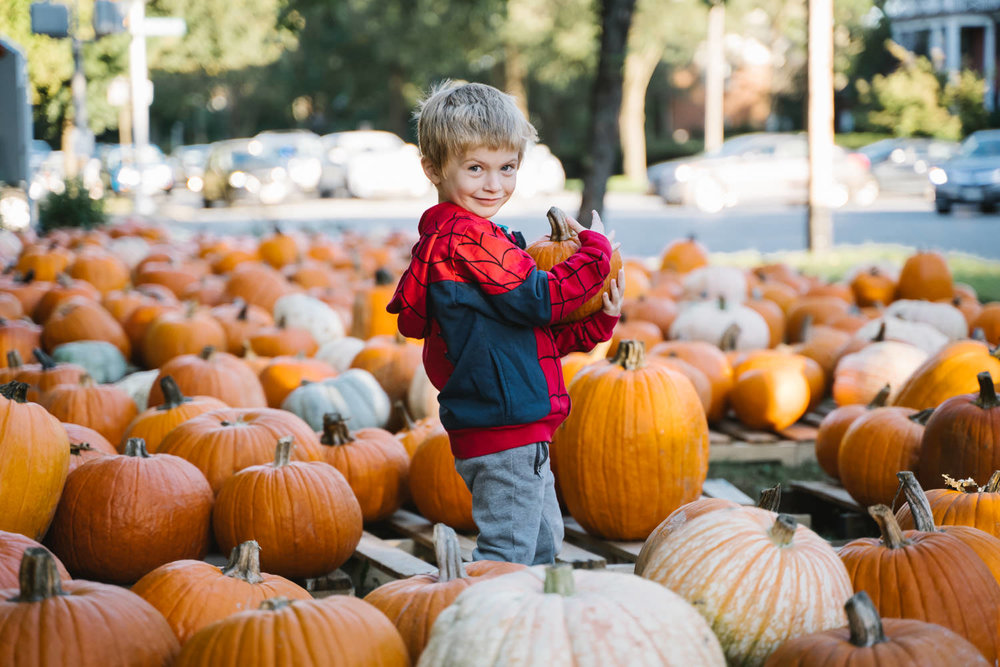 A little boy carries a pumpkin  in the pumpkin patch.