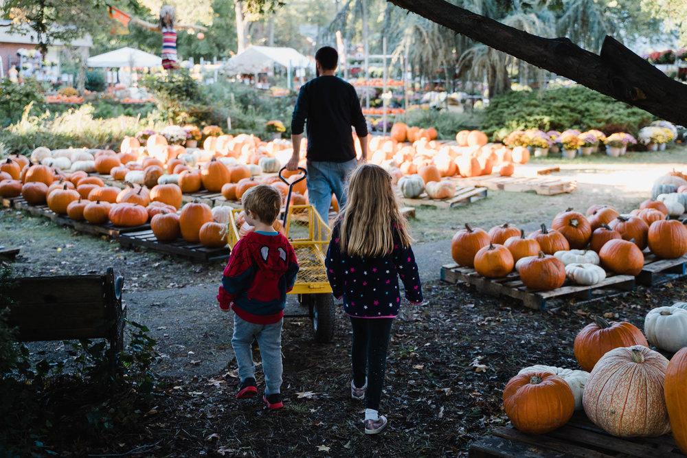 Two kids follow their dad through a pumpkin patch.