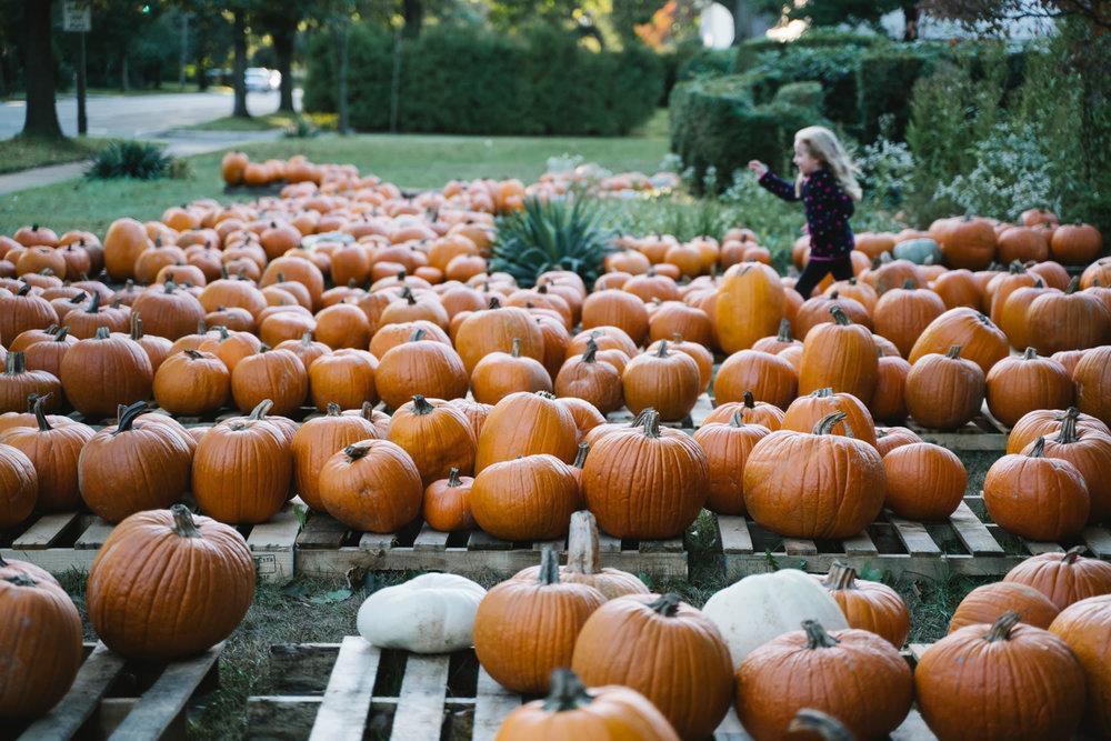 A little girl runs through a pumpkin patch.