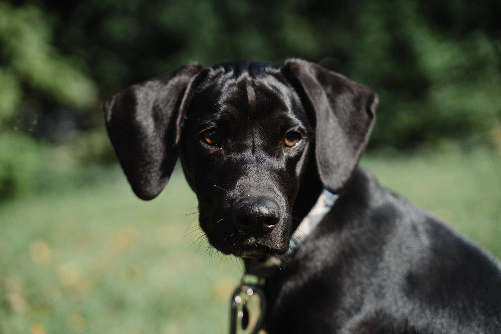 A little black dog.