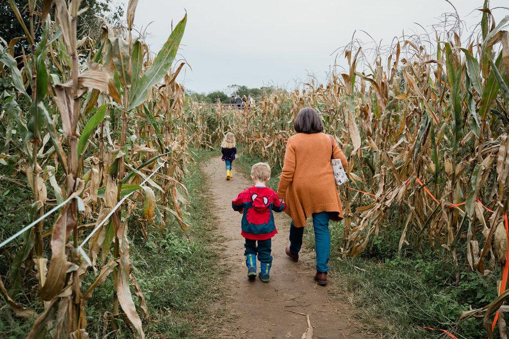 A family walks through a corn maze at the Queens County Farm.