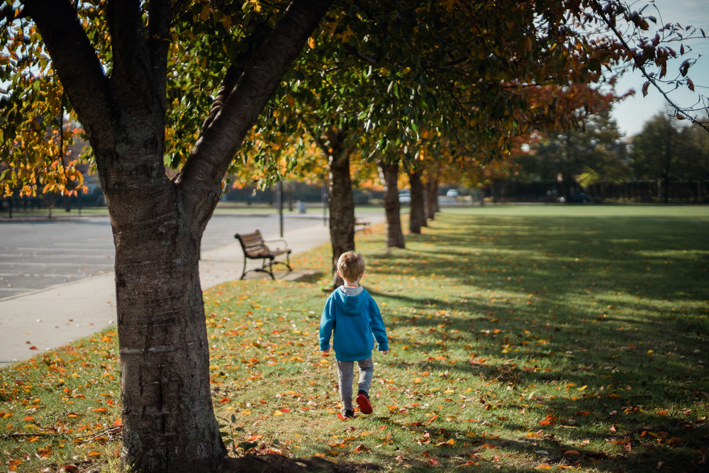 A little boy walks through fall trees.