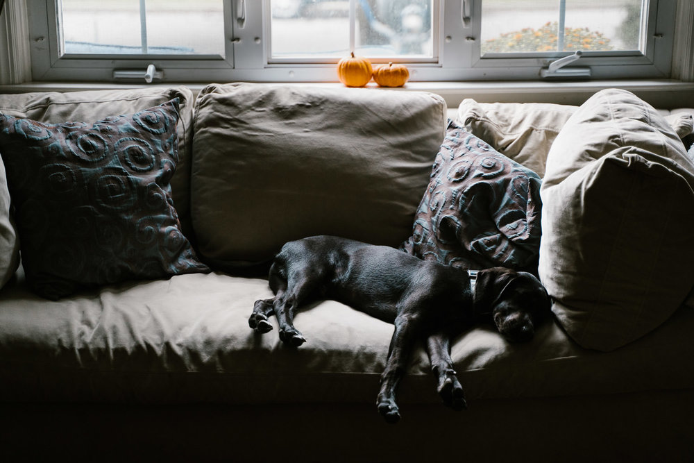 A dog naps on a couch.