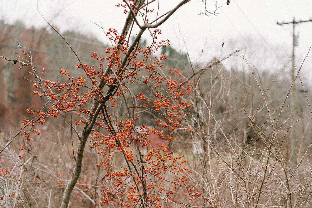 Red berries.