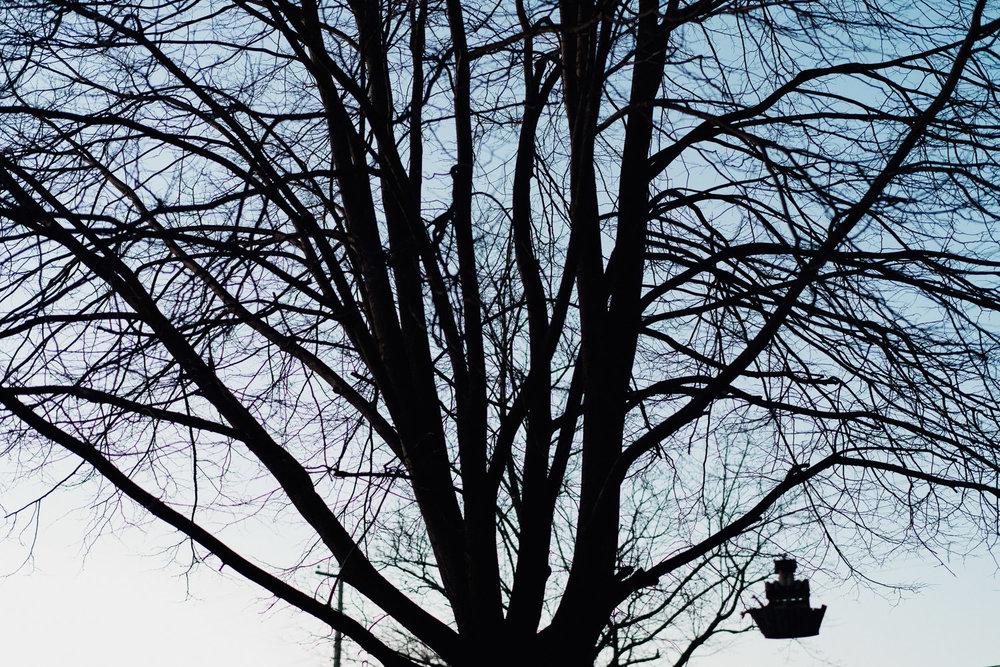 A bare tree.