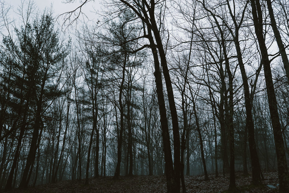 Bare trees in the woods.