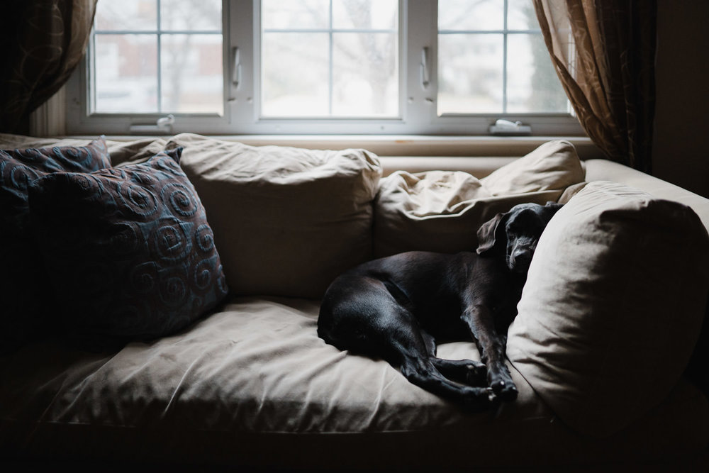 A dog snuggles on a couch.